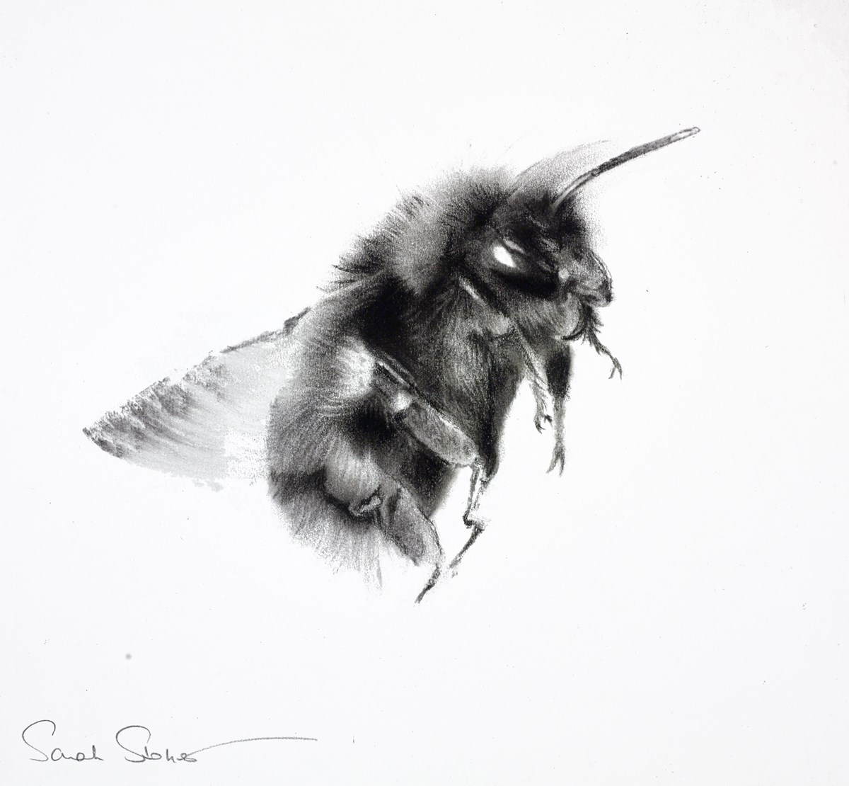 Buzzin' Around I by sarah stokes -  sized 13x12 inches. Available from Whitewall Galleries